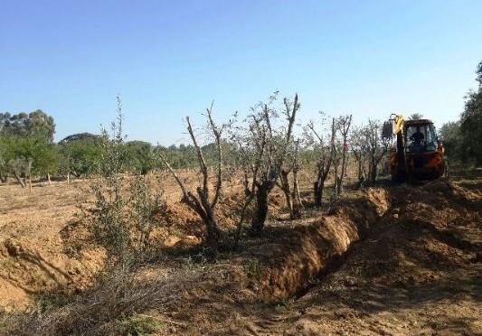 אלי אסקוזידו הוביל לנטיעת עצים בנצר חזני